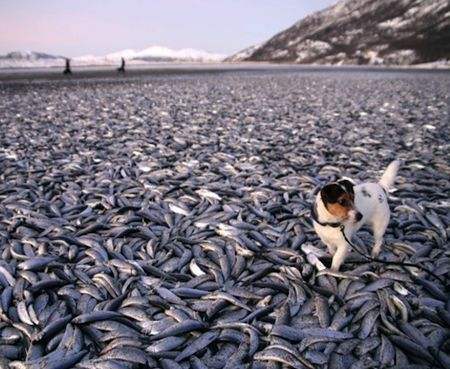 Dog with Herring