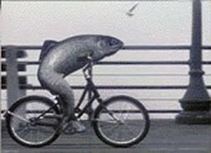 Fish and Bicycle 300